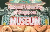 The NUS Museum